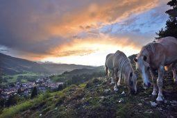 Agritur Darial | Val di Fiemme | Tesero