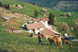 Agritur Darial | Val di Fiemme | Cavalli e natura